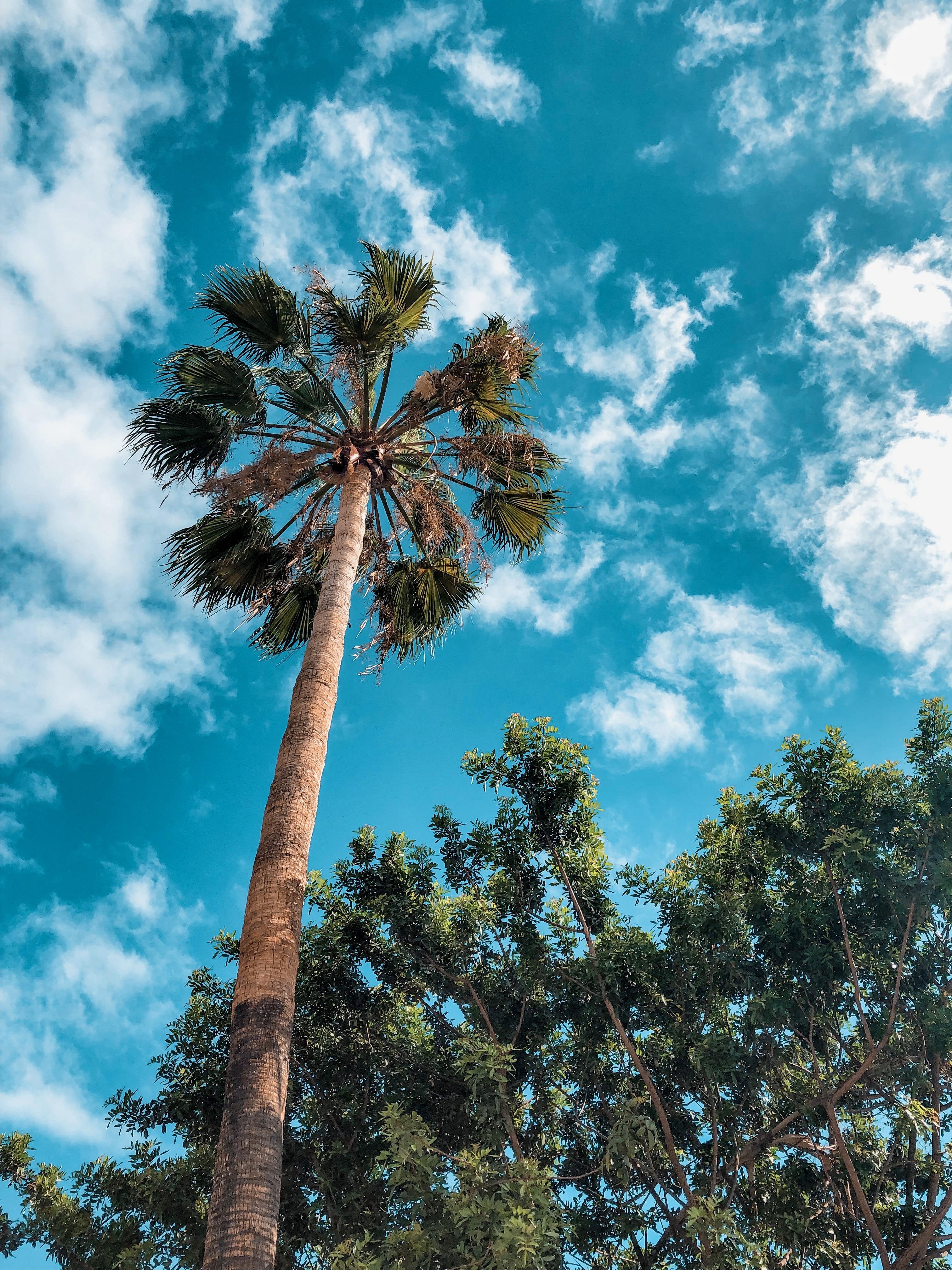 Tenerife | Nicole Navigates